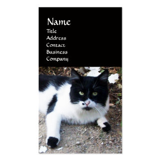 BLACK AND WHITE TURKISH CAT PIERO BUSINESS CARD TEMPLATES