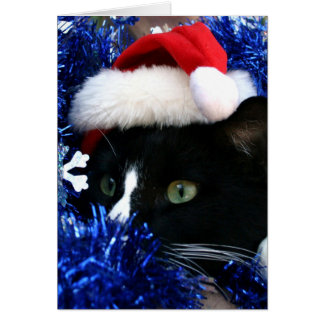 Black and white tuxedo cat christmas hat tinsel card