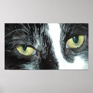 Black and White Tuxedo Cat Print