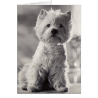 Black and White Westie Card