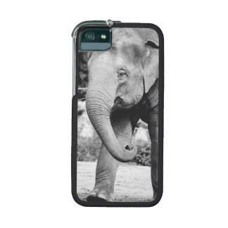 Black and White Young Elepgant Photograph iPhone 5/5S Covers