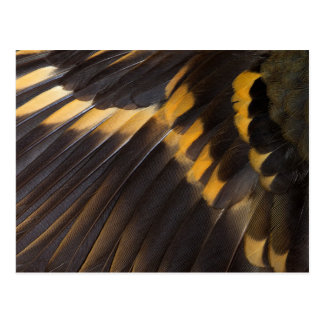 Black And Yellow Feather Abstract Postcard
