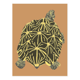 Black and Yellow Star Tortoise, painting postcards