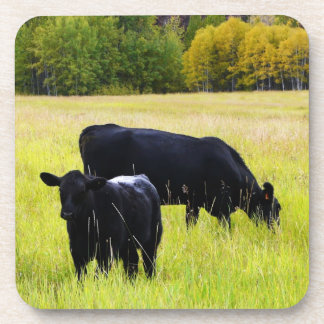 Black Angus Cattle Grazing in Yellow Grass Field Drink Coaster