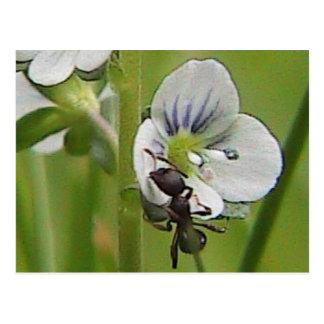 Black Ant Blue Flower Postcard