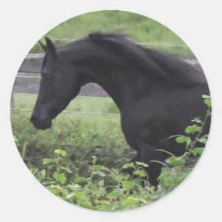 Black Arabian Stallion Round Sticker