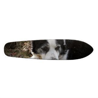 Black Australian Cattle Dog Skate Deck