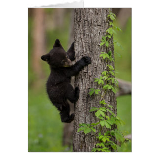 Black Bear Cub Climbing Tree Card
