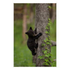 Black Bear Cub Climbing Tree Poster