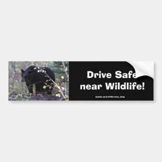 Black Bear Cub Driving Safety Bumper Sticker