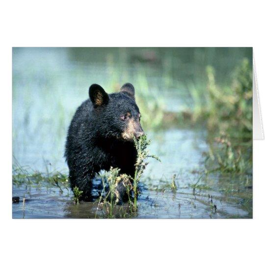 Black Bear-cub in summer marsh Card