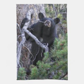 black bear cub kitchen towel