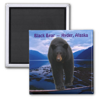 BLACK BEAR Hyder, Alaska Wildlife Magnet