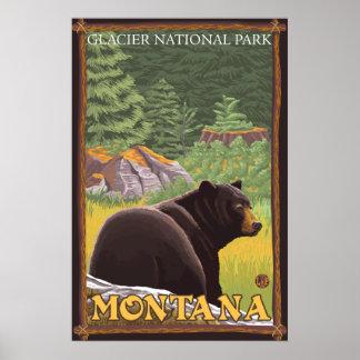 Black Bear in Forest - Glacier National Park, MT Poster