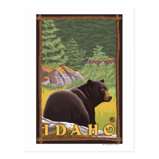 Black Bear in Forest - Idaho Postcard