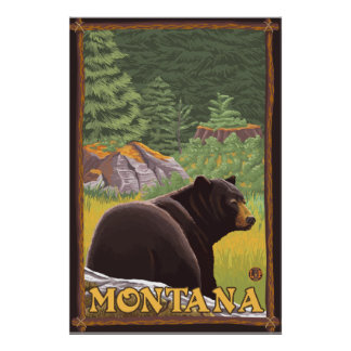 Black Bear in Forest - Montana Poster