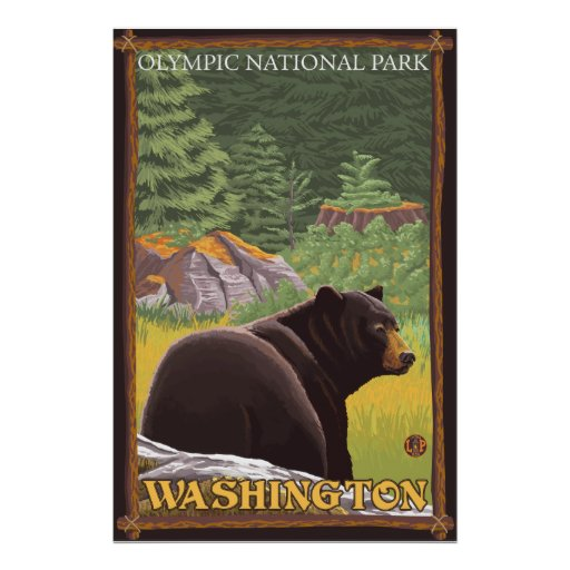 Black Bear in Forest - Olympic Nat'l Park, WA Poster