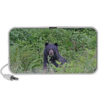 Black Bear in the Woods Travelling Speakers