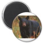 Black Bear Magnet
