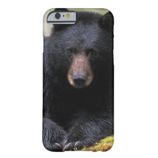 Black bear on an old growth log in the barely there iPhone 6 case