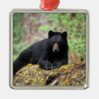 Black bear on an old growth log in the christmas ornament