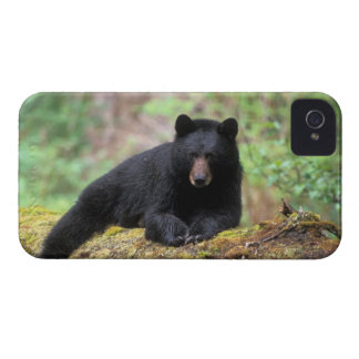 Black bear on an old growth log in the iPhone 4 Case-Mate cases