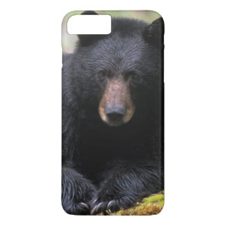 Black bear on an old growth log in the iPhone 8 plus/7 plus case