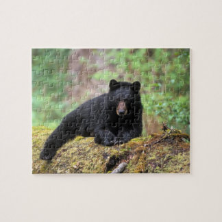 Black bear on an old growth log in the jigsaw puzzle