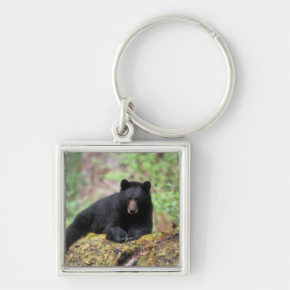 Black bear on an old growth log in the key ring