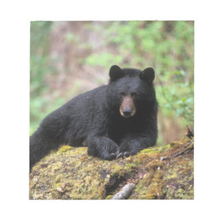 Black bear on an old growth log in the notepad