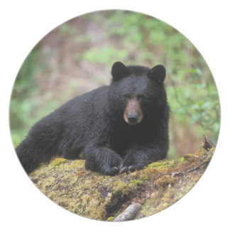 Black bear on an old growth log in the plate