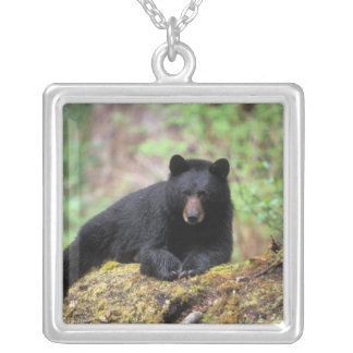 Black bear on an old growth log in the silver plated necklace
