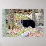 Black Bear Print