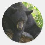 black bear round stickers