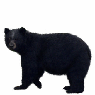 BLACK BEAR sculpted Wildlife Magnet Photo Cut Out
