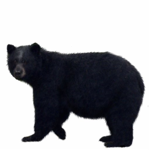 BLACK BEAR (sculpted) Wildlife Magnet Photo Cut Out