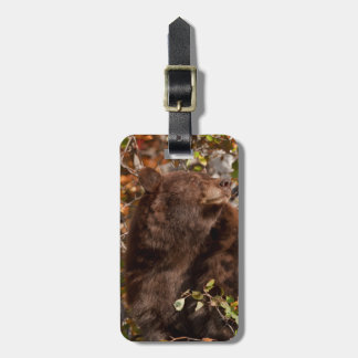 Black bear searching for autumn berries luggage tag