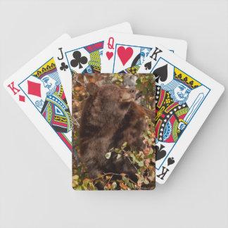 Black bear searching for autumn berries poker deck