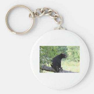 black bear sitting in tree basic round button key ring