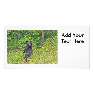 Black Bear Standing Up Picture Card
