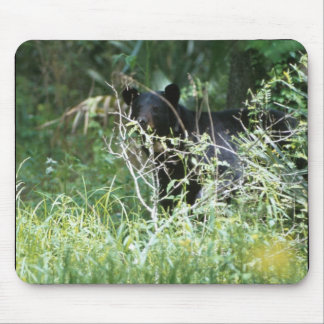 Black Bear Under Cover Mouse Pad