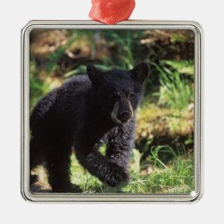 black bear, Ursus americanus, cub at Anan Christmas Ornament