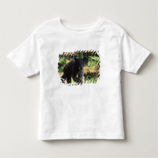 black bear, Ursus americanus, cub at Anan Toddler T-Shirt