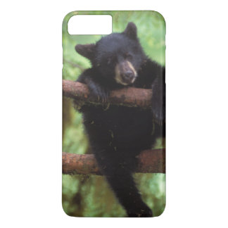 black bear, Ursus americanus, cub in a tree iPhone 8 Plus/7 Plus Case