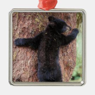 black bear, Ursus americanus, cub in tree, Anan 2 Christmas Ornament