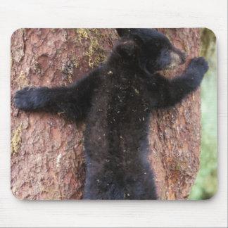 black bear, Ursus americanus, cub in tree, Anan 2 Mouse Mat
