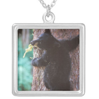 black bear, Ursus americanus, cub in tree, Silver Plated Necklace