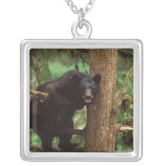 black bear, Ursus americanus, sow in a tree Silver Plated Necklace