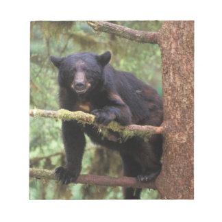 black bear, Ursus americanus, sow in tree, Anan Notepads