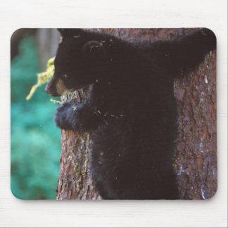 black bear, Ursus americanus, spring cub in a Mouse Mat